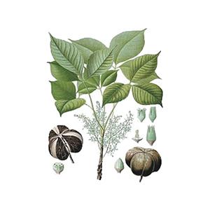 organic-inca-inchi-oil_PlanetaZdrowie
